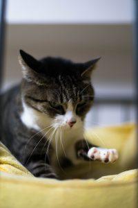 50mm f/1.8 1/320s ISO200 (Nikon610 / AF-S 50mm f1.8) 我が家の愛猫 マクロレンズ ふみふみ