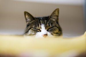 50mm f/1.8 1/400s ISO200 (Nikon610 / AF-S 50mm f1.8) 我が家の愛猫 マクロレンズ ふみふみ