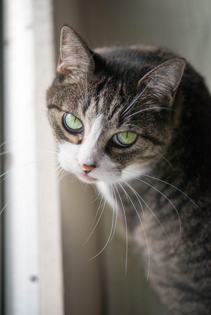 猫の目昼間