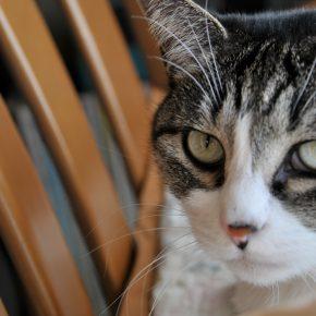 ヒナ 我が家の愛猫
