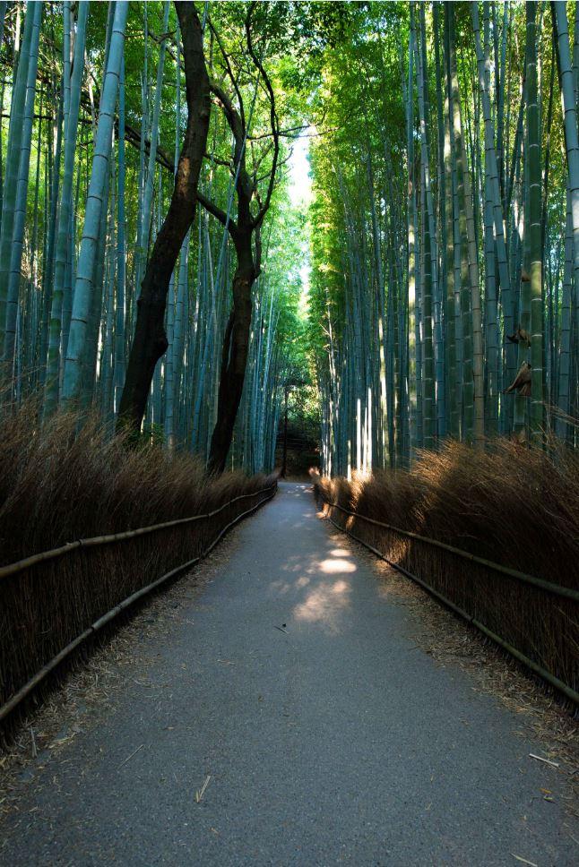アクアが走っていた竹林の道