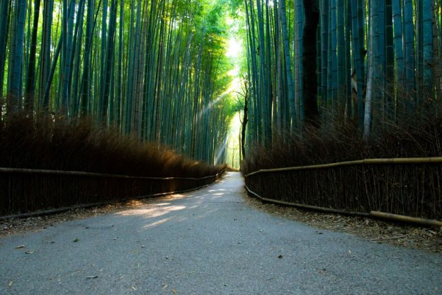 竹林の道_空の境界