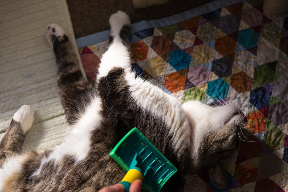 猫 マクロ撮影 写真